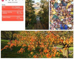קולאז של ארבע תמונות בתחתונה עץ הצבעי שלכת. עליונה ימנית נעליים על רקע שטיח עלי שלכת, באמצעית מסלול של רכבל בצילום מלמעלה, בשמאלית צילום מסך של אפליקצית צעדים.